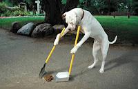 se hiso millonario recogiendo excremento de perro
