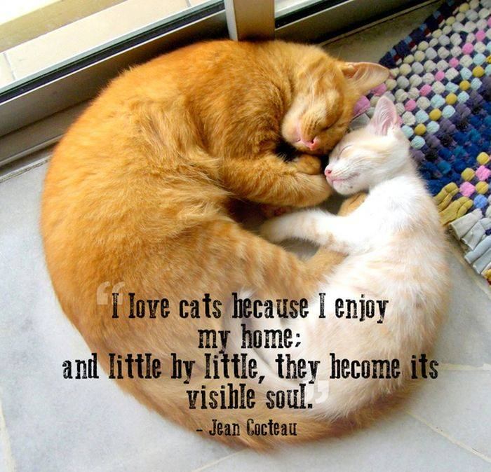 Friendship Quotes Cats: Mail2Day: 21 Great Quotes About Pets