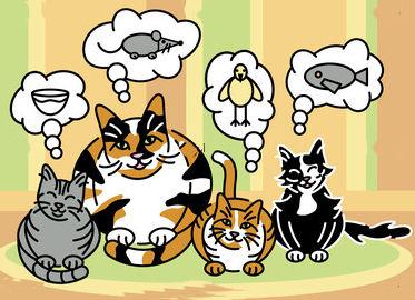 Diario Di Una Biologa Ribelle Alimentazione Del Gatto Domande E