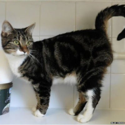 behemoth cat battle cats serial code
