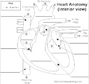 Life Science Heart Diagram Worksheet