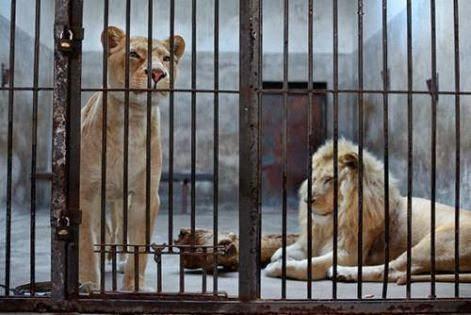 ذهب زوجان معا الى حديقة الحيوان فحصلت قصة رائعة