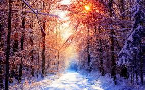 صور اشجار مغطاة بالثلج خلال فصل الشتاء