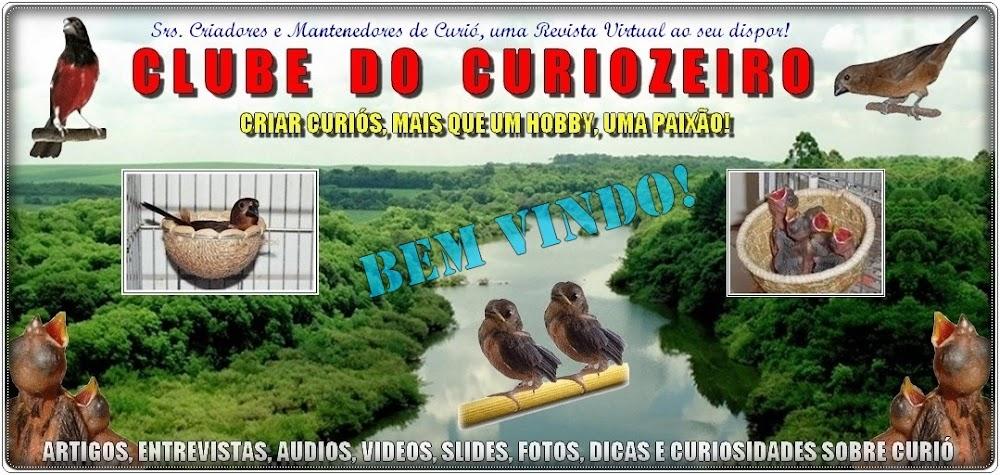 CURIOZEIRO - Criar Curiós, mais que um hobby, uma paixão!