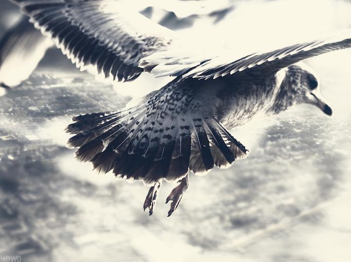 Sobre el mundo desde la perspectiva del pájaro