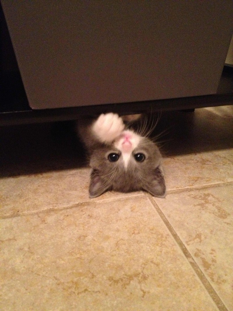 Funny cats - part 49, funny cat pictures, cute cats, cat photos, photos of cats, cat pics
