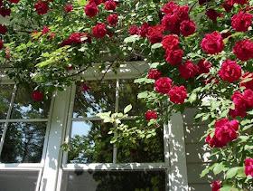 J'adore fenêtre floride...