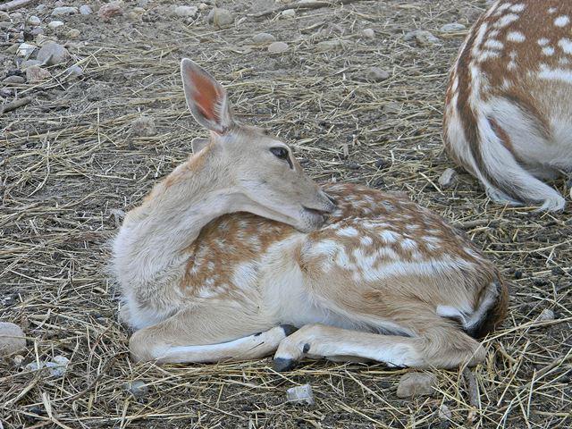 jakie zwierzęta znajdziemy w mini zoo w Mostkach