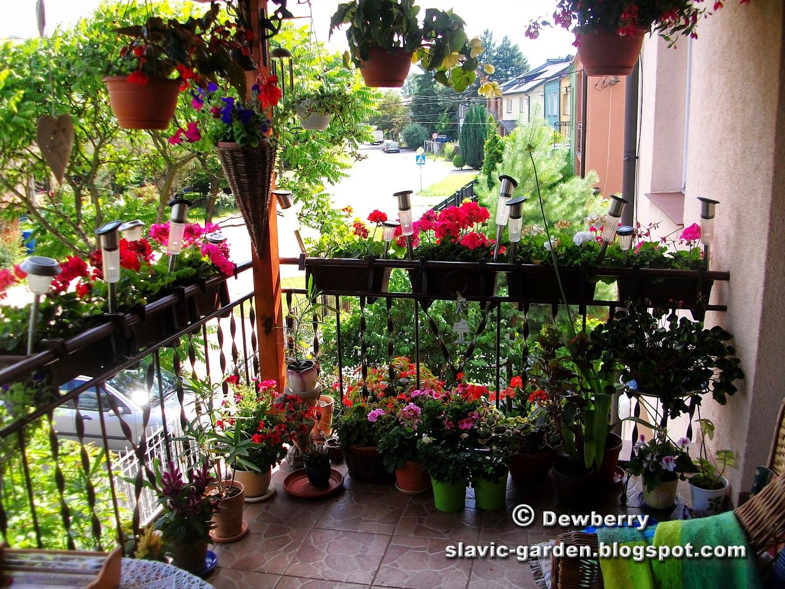 Apartment balcony garden: apartment balcony vegetable garden ...