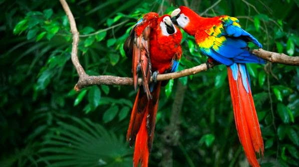 Macaws Cancun