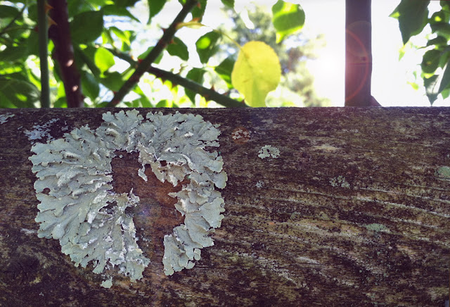 lichen on log at Wave Hill, Bronx, NY