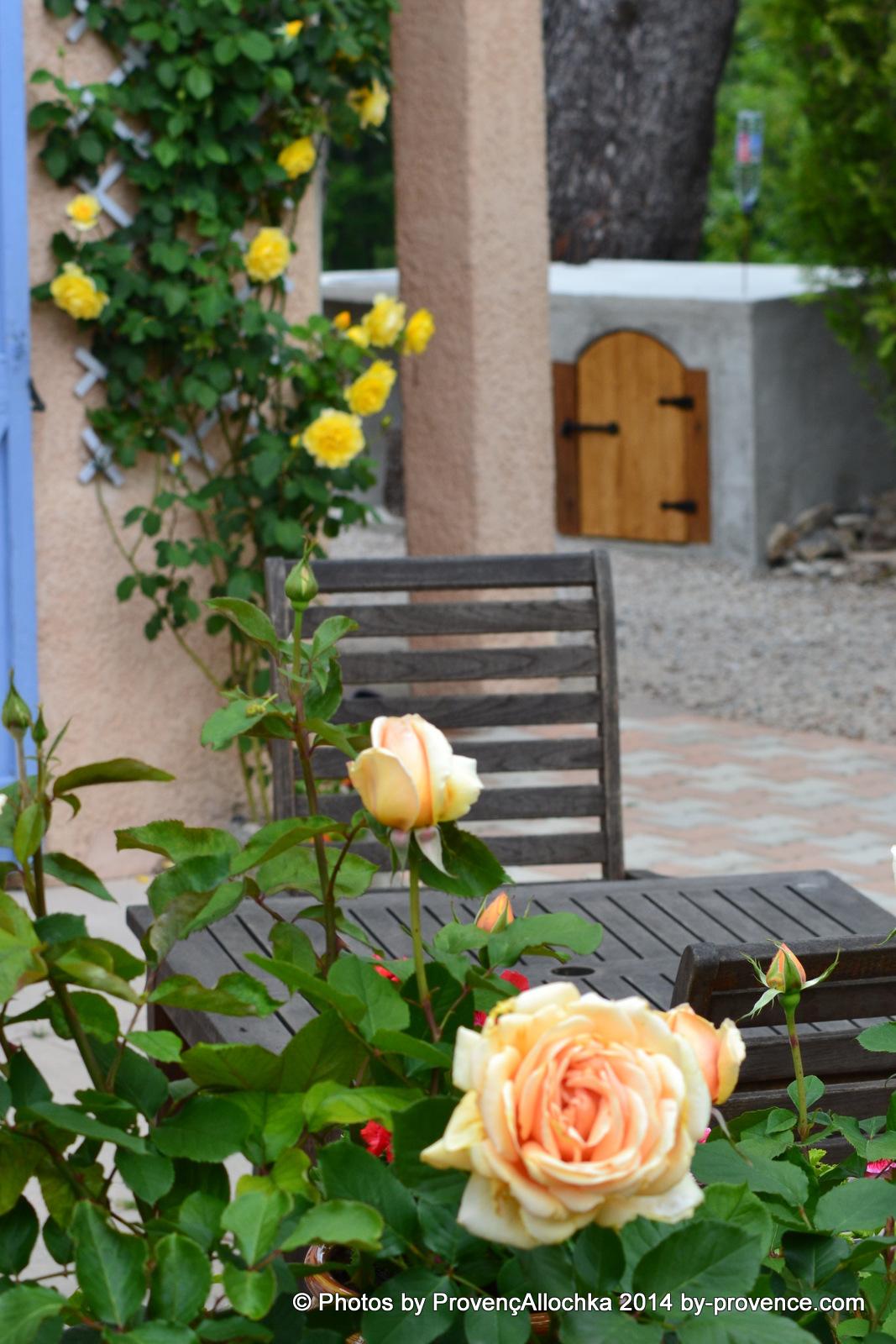 Rose Valencia ,patio des roses