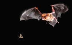 Scary Jungle Critter #5: Bats