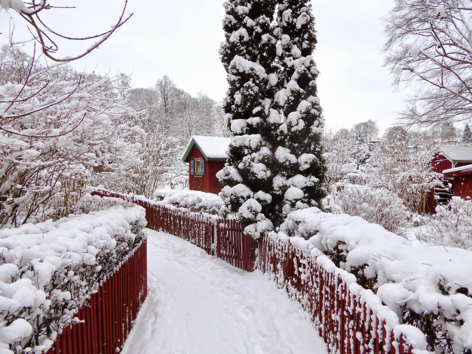 snö vit
