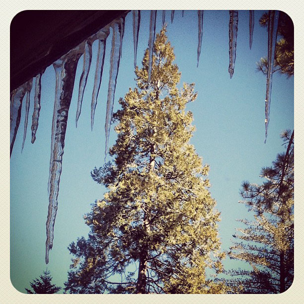 icicles and trees