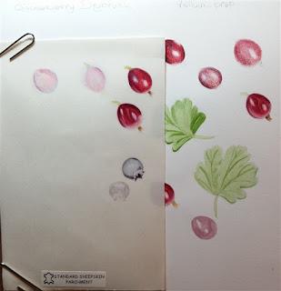 watercolour dry brush, vellum, paper