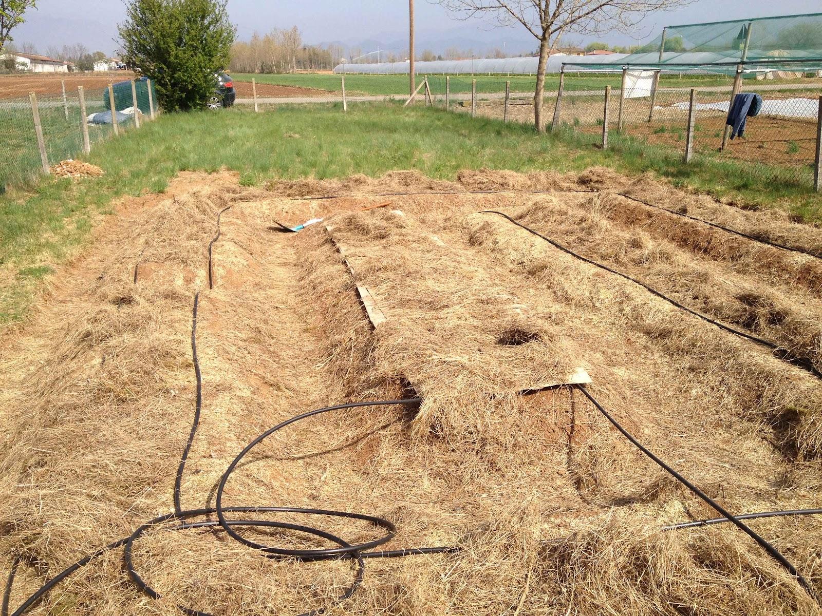 Contorto l 39 impianto di irrigazione fai da te a goccia for Impianto irrigazione fai da te