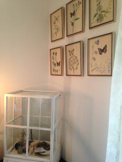 Fjärilar, fjärilstavlor, växthus, inredning, vitt