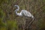Wildlife at Magnolia