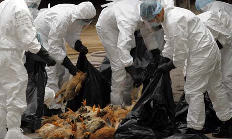 Scary new H7N9 bird flu strain leaps from China to Taiwan; human transmission already achieved?