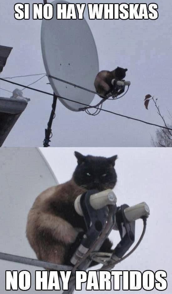 imagen graciosa de un gato - 'si no hay whiskas no hay partidos'