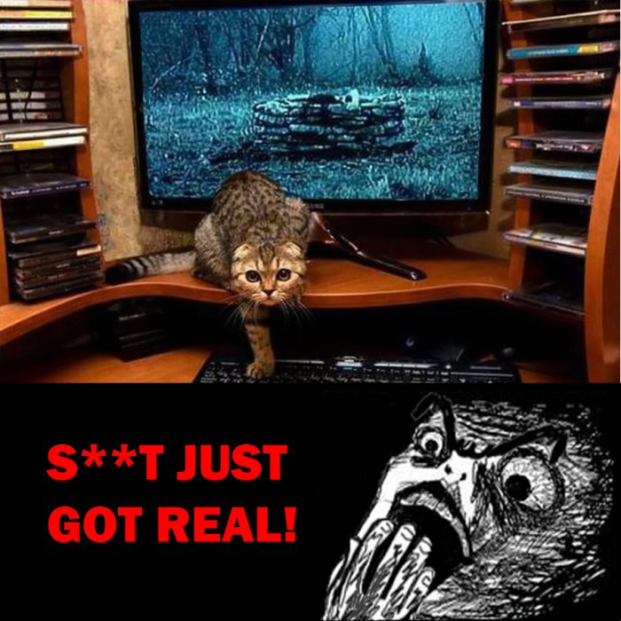 Shit Just Got Real! - Ring Cat Movie