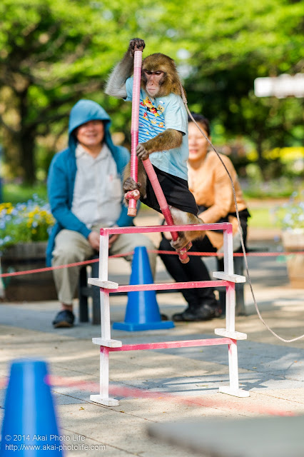大道芸まつり猿回し