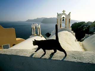 greek islands sun reflection on deep blue sea - local cat and view