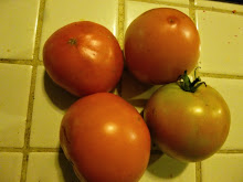 the last tomatoes...