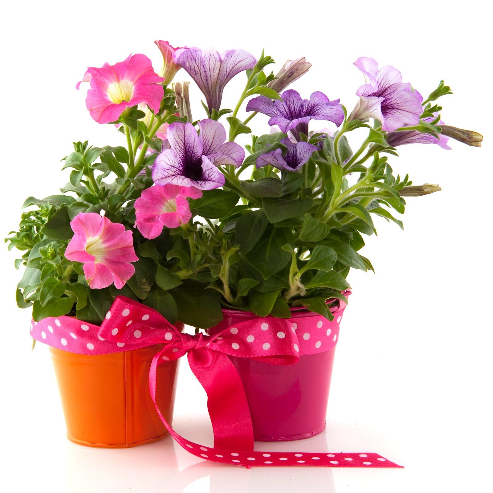 macetas de flores