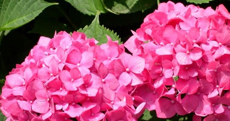 Plantamer plantas negativas seg n el feng shui for Plantas que se deben tener en casa segun feng shui