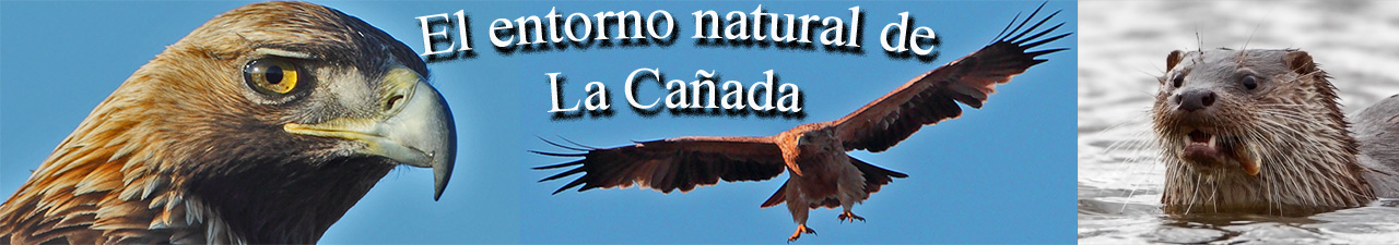El entorno natural de La Caada