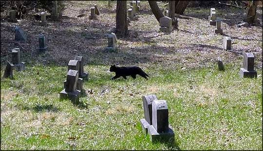 Aspen Hill Pet Cemetery