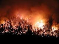 Balıkesirde Kazdağlarında  ÇıkanOrman Yangını