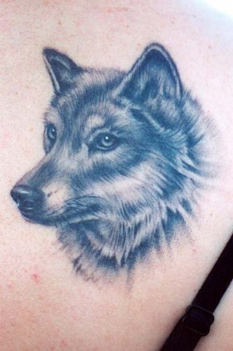 Tattoo design wolf tattoos for Wolf head tattoos