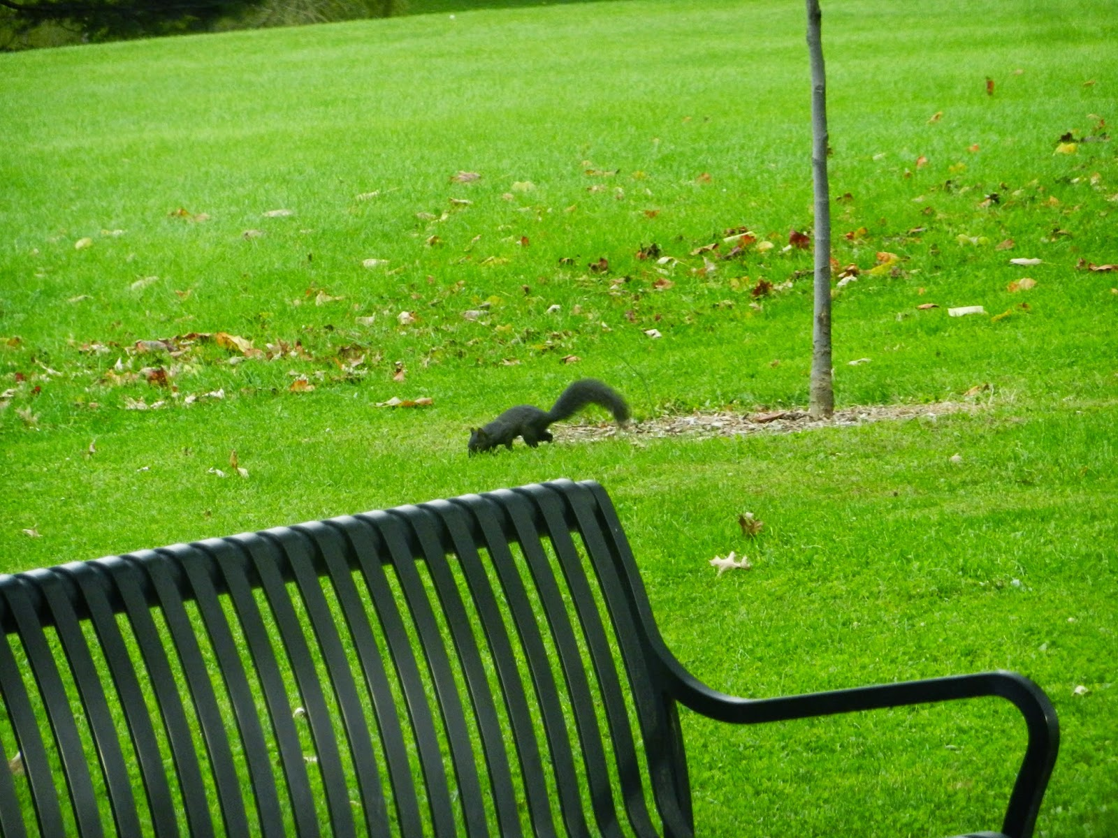 park squirrels leclaire illinois