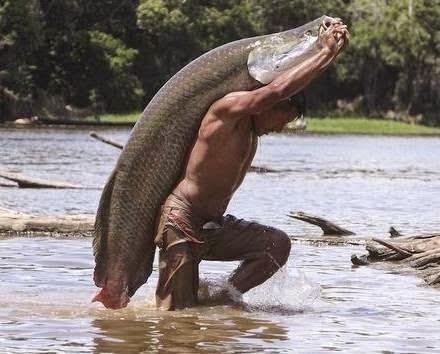 Amazon's Biggest Fish may Vanish