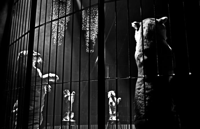 Cage à Matous