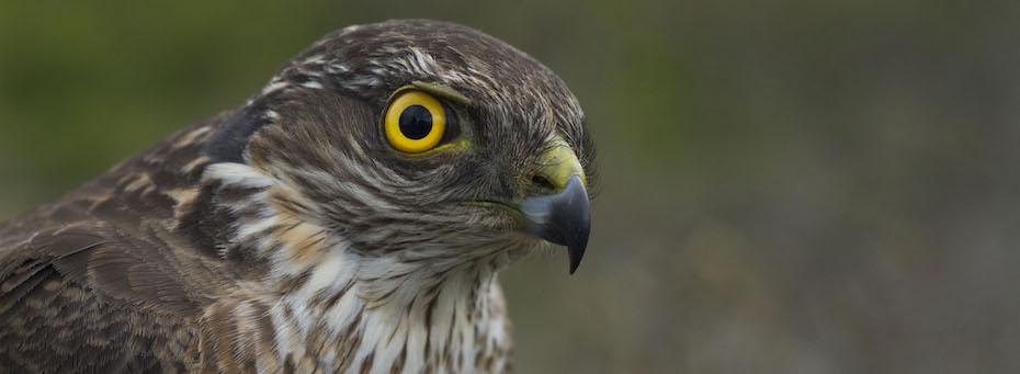 Odd Birding