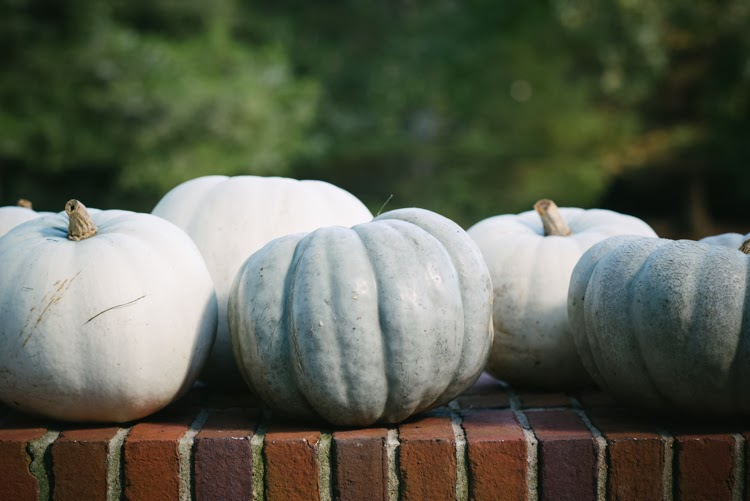 white and green pumpkins on brick ledge for wedding day festivities