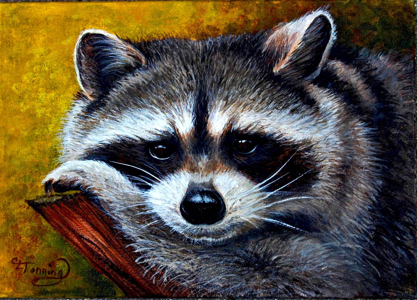 Catherine's stories: April 2013 Raccoon Painting