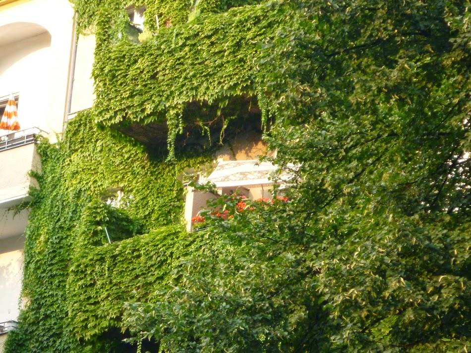 Efeubegrünte Fassade, in der man die Fenster/Balkone noch ahnen kann