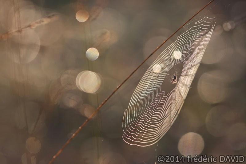 araignée toile forêt Fontainebleau macro