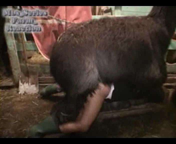 video zoofilia gay   lhama arrebentando o c de um marmanjo