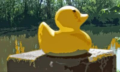 Die Ente und die Saale