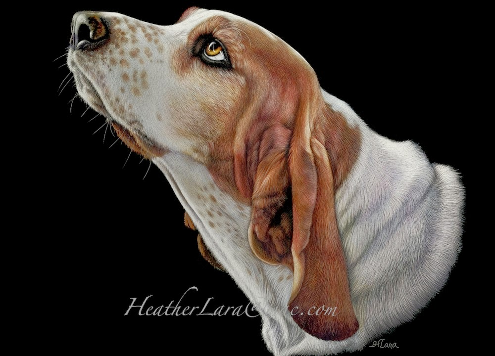 01-Basset-Hound-Heather-Lara-Hyper-realistic-Animal-Scratchboard-Drawings-Wildlife-www-designstack-co