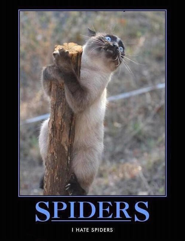 Funny Spider Meme : Demotivational funny memes time for fum and