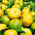 Mandarinas de Veracruz