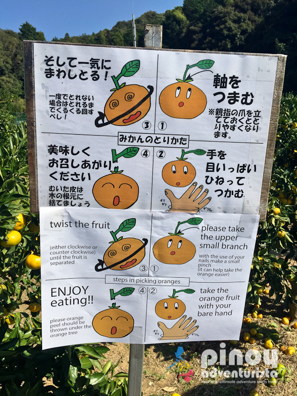 Gamagori Orange Park Japan