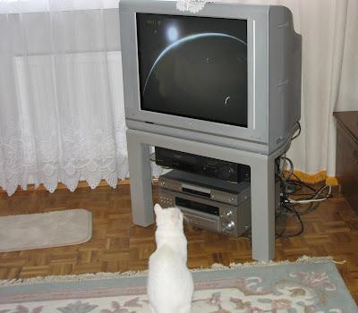 Smerfunia ogląda film. Nie przeszkadzać, mrruu!